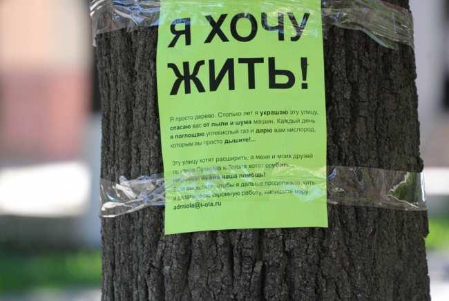Часть дорог хотят расширить за счет деревьев. Список
