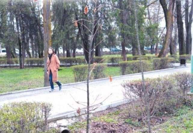 Зачем в Бишкеке опять сажают дубы?