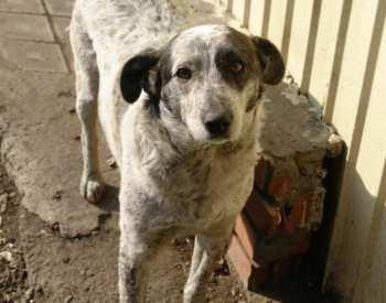 В Бишкеке запустят проект по контролю численности бездомных собак