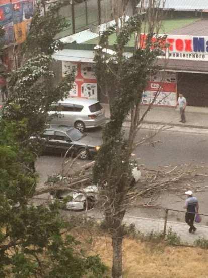 Из-за сильного ветра дерево упало и всмятку раздавило машину. Фото