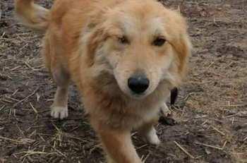 Неизвестный застрелил собаку главы фонда «Бугу-Эне» Салтанат Сеитовой