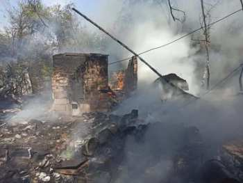 В Бишкеке неизвестные сожгли, зарезали и застрелили 30 собак и кошек