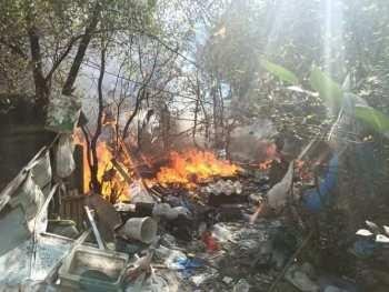 Убийство бездомных животных в Бишкеке. Милиция ищет очевидцев
