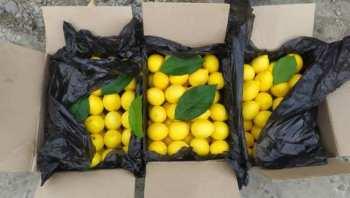 В Баткенской области уничтожили 3 тонны контрабандных лимонов