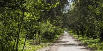 В столичном Ботаническом саду обнаружен труп женщины